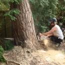 pine-fell-078