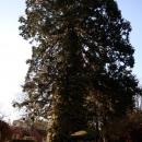 sequoia-fell-007